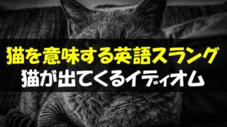 猫 英語 スラング